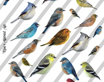 Digital Collage Sheet Birds (Sheet no. FS2) Instant  Download