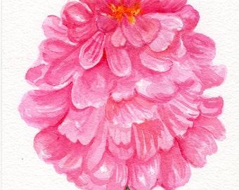 Pink Zinnia watercolors paintings original, 5 x 7 small floral art, original watercolor painting of pink zinnia