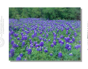 Texas Bluebonnets, Field of Bluebonnets, Spring Flower field, Native Blue Flower 8x10 signed photo art