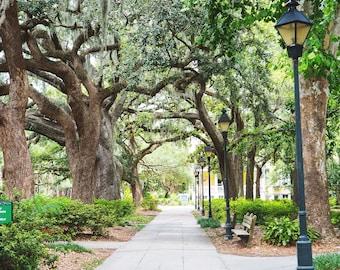 Tree Print, Tree Photography, Forsyth Park, Savannah Georgia Art, Avenue of Oaks, Savannah Art Fine Art Photography, Oak tree, spanish moss