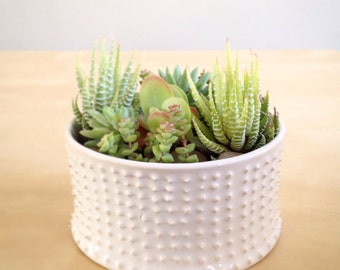 Spiked modern Terrarium garden home decor Handmade ceramic succulent planter in white