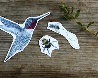 Bird and Bees Sticker Set: Three Vinyl Stickers, Anna's Hummingbird, Native California Bees