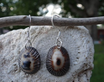 Delicate Limpet Earrings, Striped False Limpet Shell Earrings, Florida Shell Earrings, Limpet Shell Earrings