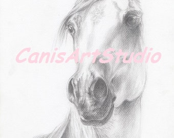 ARABIAN HORSE HEAD Equestrian Art Graphite Pencil Drawing Original Fine Art Hand drawn Horse portrait Black and White Equine Framed Art