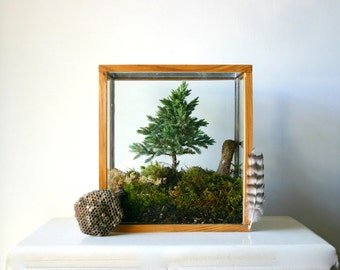 Miniature Forest Plant Kit For Terrarium
