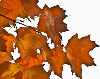Autumn Leaves Photo Wall Art
