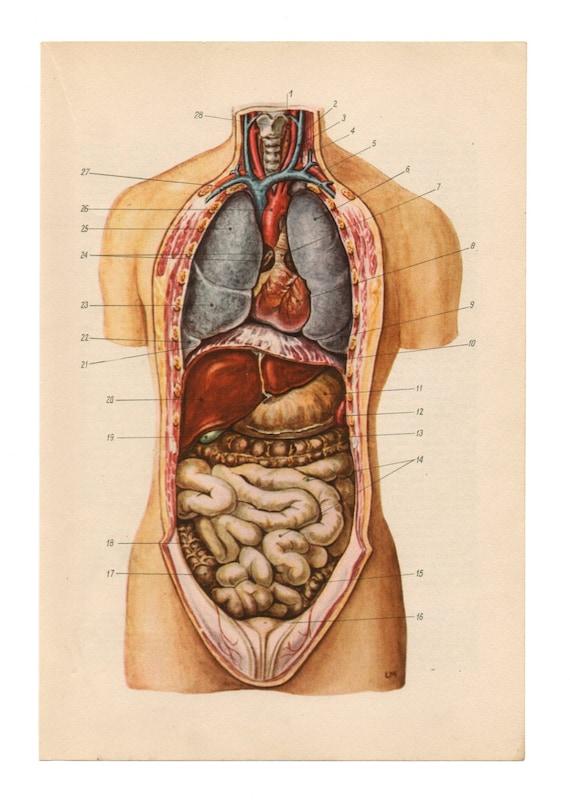 Anatomische Drucke Vintage medizinische Diagramme Schädel