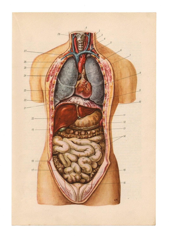 Anatomical prints vintage medical diagrams skull skeleton zoom ccuart Images
