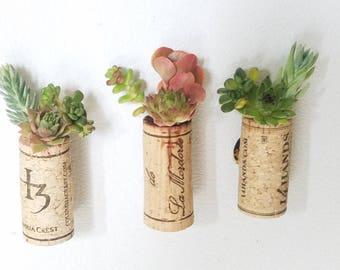 Little succulent gardens!
