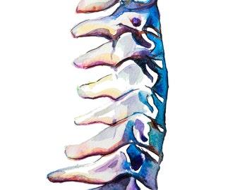 Impresión de espina pintura acuarela, acuarela grabada, Cervical espina dorsal cervical, arte médico, arte ciencia, Ilustración de la anatomía, anatomía moderna