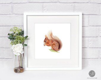 Red Head Squirrel Framed Print Artwork Picture