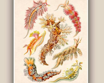 Sea creature Print, Nudibranchia Print, LARGE Vintage sea slugs illustration,  Marine Wall Decor,  Nautical art, Print 11'x14'