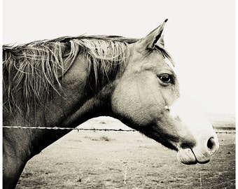 Horse Photograph, Horse Photography - black and white horse photo, 8x8 fine art horse portrait