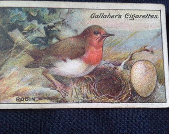 Gallaher Cigarettes Picture Card Birds Nests And Eggs Series No2 Robin