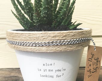 aloe! is it me you're looking for | funny pot plant with a pun| music lyrics | lionel richie 11cm pot
