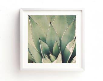 agave photograph, desert photography, printable download, desert print, succulent, nature photo, green baby nursery, southwest decor