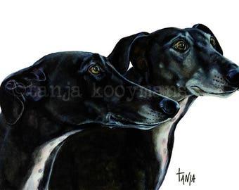 black Greyhounds , black galgo, black sighthounds greyhound print, Art print size 8x12 inch