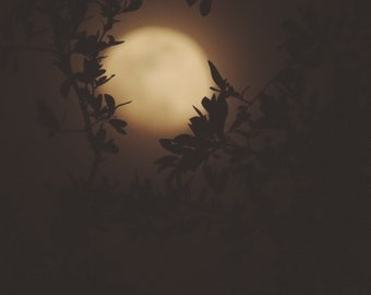 Nature Photography, Moon Photography, Dreamy, Surreal, Magical, Sky, Dark, fPOE, Don't Let Me Know That I'm Dreaming