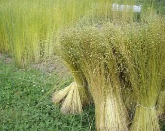 HeirloomSupplySuccess Heirloom Flax Seeds