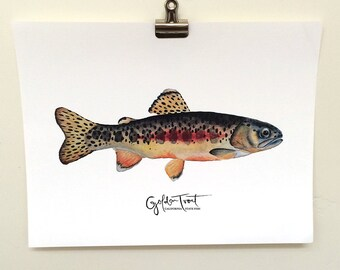 Golden Trout- Watercolor and Hand Lettered