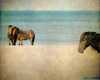 Horse Photograph, Wild Horses, Mustangs, Horse Art, Nature, Equine Art, Beach, Summer, Teal, Brown, Beach Cottage Decor  - Wild Ones