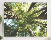 forest canvas gallery wra...