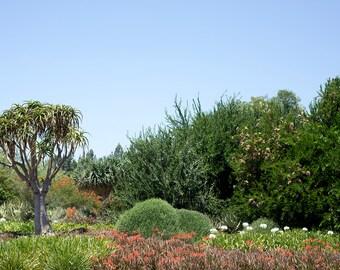 Arboretum, Garden Escape