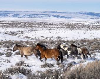 Wild Horses Running Through the Snow in Sand Wash Basin - 11x14 Gallery Wrapped Canvas Print - Ohitika's band, winter, cold