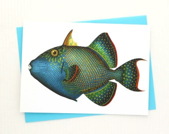 Blue Green Fish 5x7 Card / Beach Wall Decor - Frameable Trigger Fish Blank Greeting Card Makes a Lovely Gift
