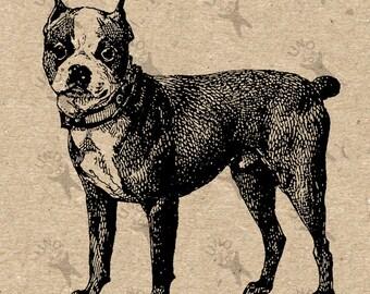 Boston Terrier Image Instant Download Digital printable vintage picture clipart graphic scrapbooking, burlap, kraft, decor  etc HQ 300dpi