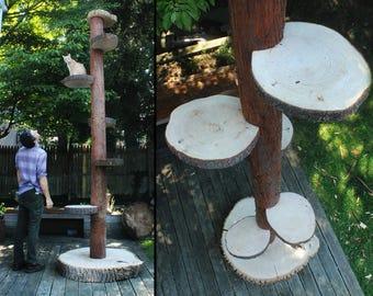 Large Custom Cat Trees - 12 Foot Cat Towers - Artistic Cat Furniture - Custom Cat Furniture - Huge Cat Trees!