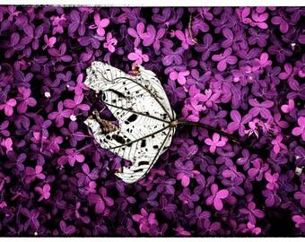 Infrared Yagrumo Leaf