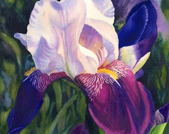 White Purple Iris Art Watercolor Painting Print by Cathy Hillegas, 8x10 art, watercolor iris, watercolor floral, Mothers Day gift for mom