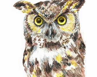 7 x 5 inch Great Horned Owl Original Hand Drawn Colored Pencil Sketch