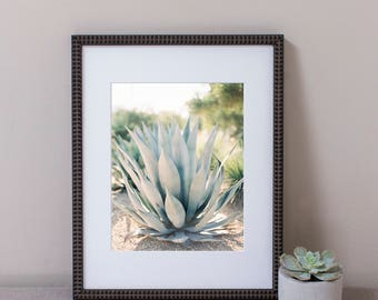 Sonoma Succulent Pastel Green Wall Art, Photography, Framed Print