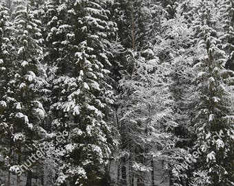 Printable Snowy Forest Winter Landscape Photography, Nature, Fir Tree Poster, Postcard Digital Download