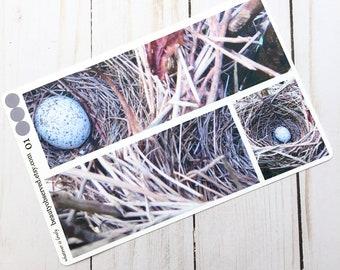 bird's nest planner stickers | bird's nest photo stickers | full box planner stickers | bird's egg stickers | vinyl matte stickers |