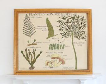 Vintage Flemish/Dutch double sided school poster - Plants without blossom - by Rossignol - vintage poster - educational poster - wall art
