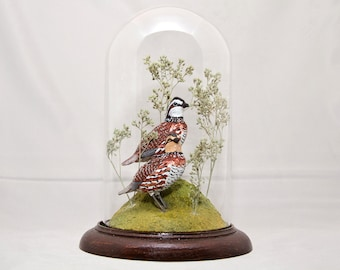 Bobwhite Quail hand-painted bird sculpture under crystal dome