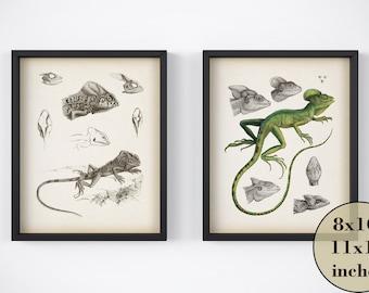 Wall art set, Reptile prints, Set of 2 prints, Printable art, Vintage animal print, Illustration, Iguana, 8x10 wall art, 11x14 wall art, JPG
