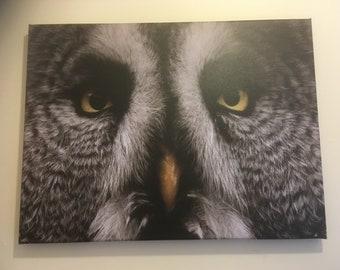 Grey owl canvas
