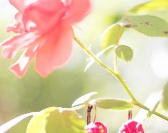 Rose buds suspended earrings • beaded earring