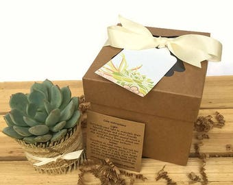 Single Succulent Gift Box-Rustic Succulent Favor-Thank You Gift-Baby Shower-Bridesmaid Gift-Bridal Shower Favor-Wedding Favor-Birthday Gift
