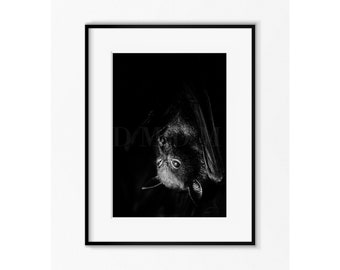 Bat , Bat Photography , Animal Print , Animal photography , Batman , Fine Art Photography , Nature Photography , Vampire , Halloween