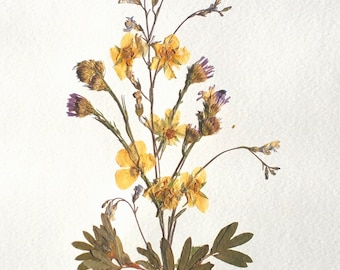 Pressed Flowers on Paper - 004