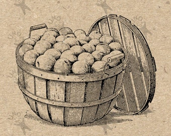 Harvest fair fruits basket Vintage image Instant Download Digital printable clipart graphic - scrapbooking, burlap, kraft, etc HQ 300dpi