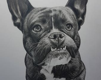 Pencil pet portrait
