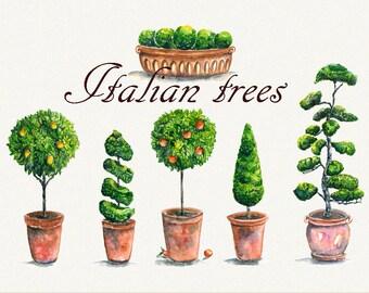 Tree clipart, italian clipart, garden clipart, lemon Tree, Orange tree, Hand Painted, clip art, digital watercolor