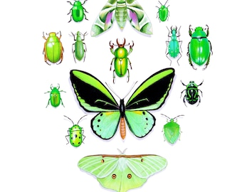 Green Insects CARD. Blank inside
