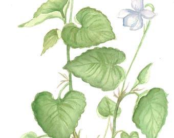 Violet Watercolor
